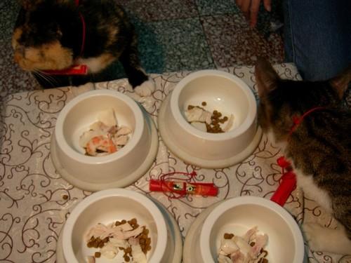 貓咪吃年夜飯囉08.jpg