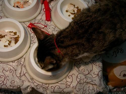 貓咪吃年夜飯囉09.jpg
