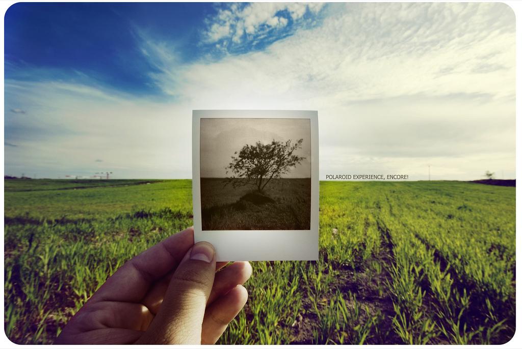 polaroid 24.jpg