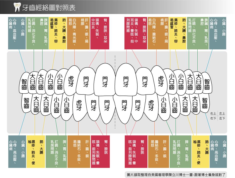 牙齒經絡圖-圖片.jpg