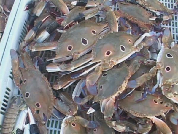 螃蟹畫面[(000042)22-06-12].JPG