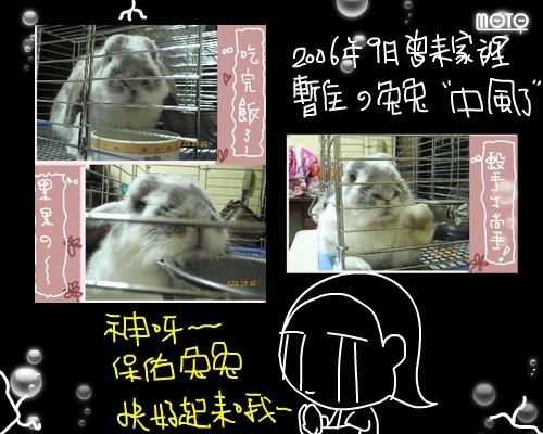080414兔兔中風了.jpg