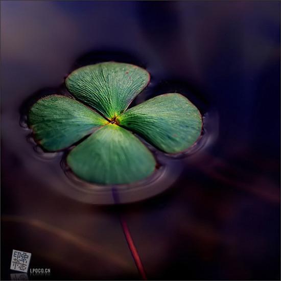 luck_06.jpg
