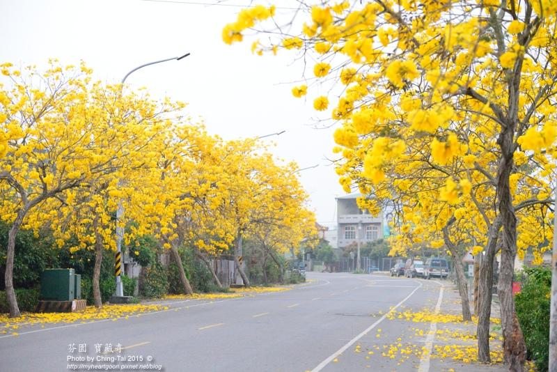 TAI_8226.jpg