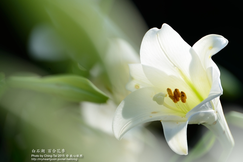 TAI_0741.jpg