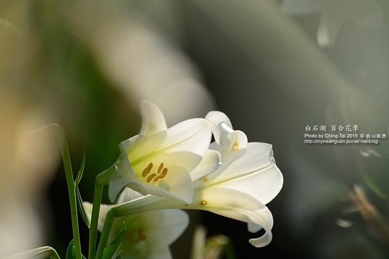 TAI_0758.jpg