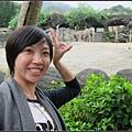 這是非洲象!!