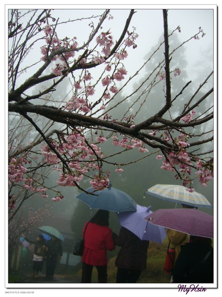 只有朵朵雨傘和點點大雨