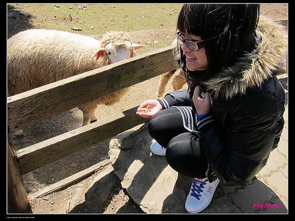 吳美珊要餵羊了!!!
