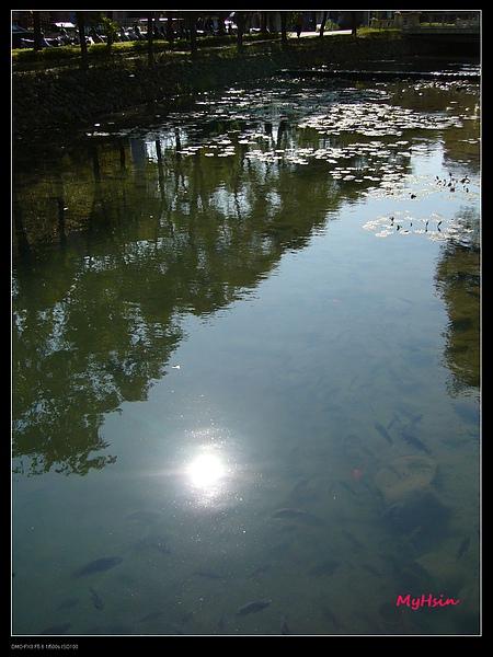 [護城河] 水中有太陽的倒影