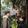 青椒、甜椒長滿樹好噁心~