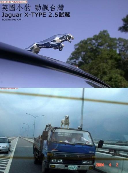 台灣與英國的Jaguar