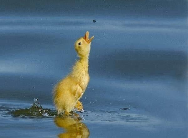 水上飄.jpg