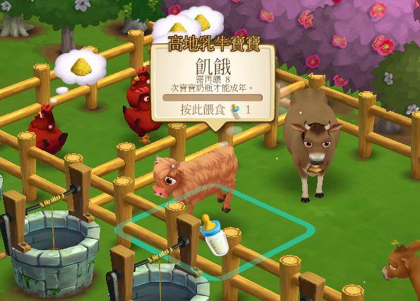 高地乳牛 (2)