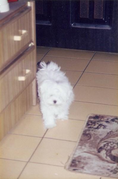 1998 Mickey的第一張照片 (1)