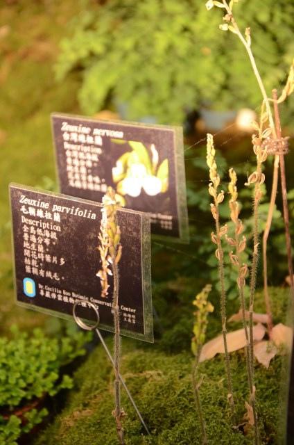 2013Bloom台灣國際蘭展 (15)