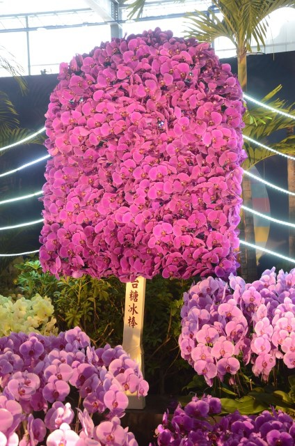 2013Bloom台灣國際蘭展 (22)