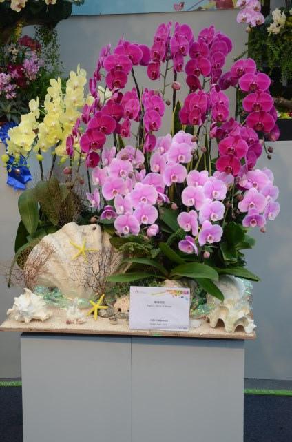 2013Bloom台灣國際蘭展 (97)