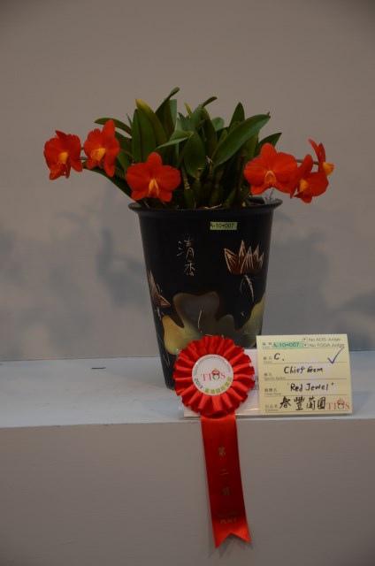 2013Bloom台灣國際蘭展 (119)