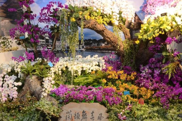 2013Bloom台灣國際蘭展 (162)