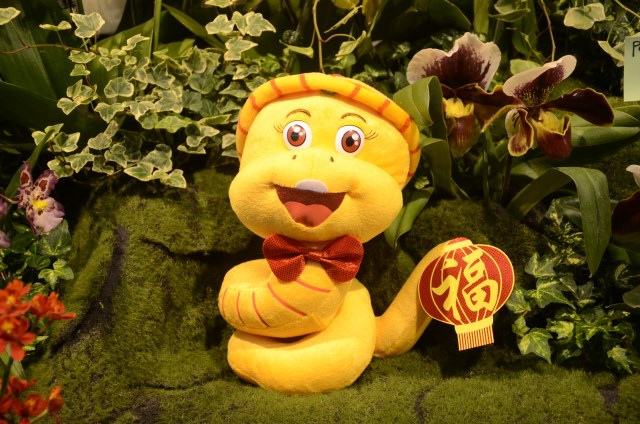 2013Bloom台灣國際蘭展 (172)