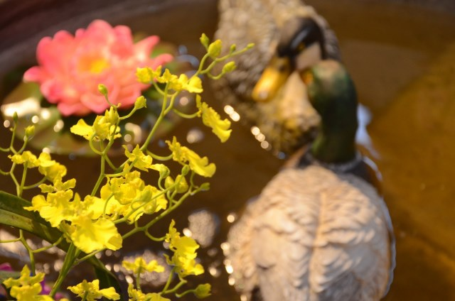 2013Bloom台灣國際蘭展 (175)