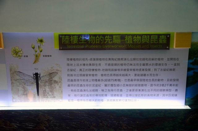 樹谷生活科學館 (6)