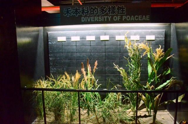 樹谷生活科學館 (70)