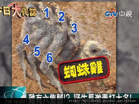 六隻腳蜘蛛雞