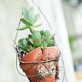 改造舊物盆栽.jpg