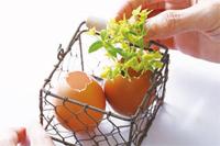 雞蛋5.jpg