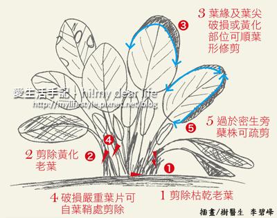 竹芋類.jpg