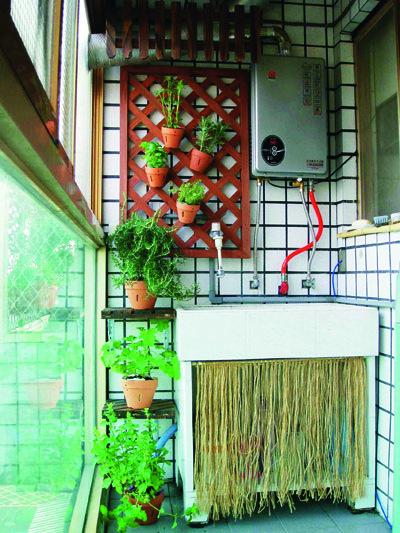 壁面花園6.jpg