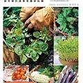 盆栽種菜超簡單-300