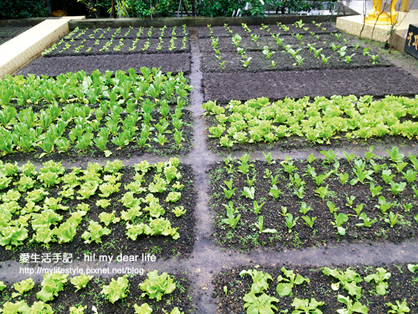 21-育苗菜圃