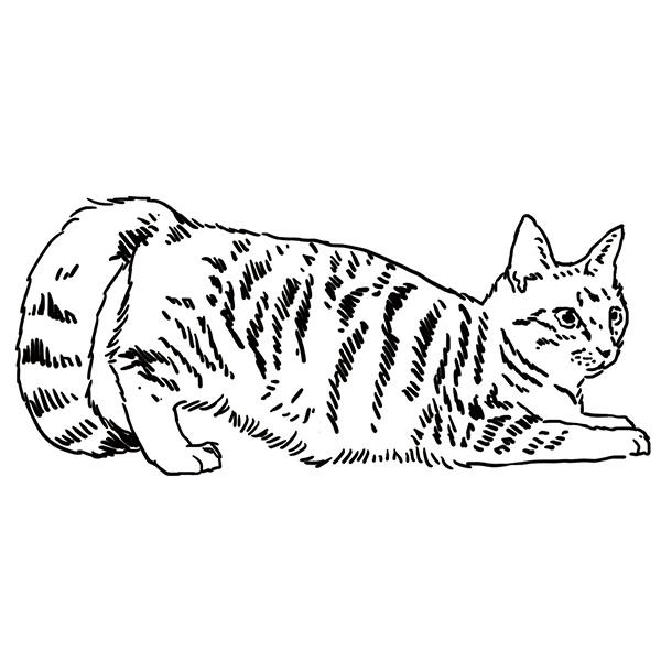 1發情的母貓