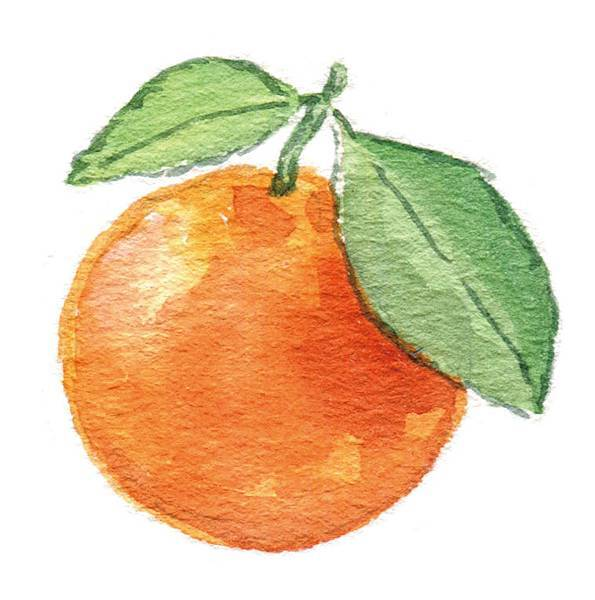 p67-3橘子