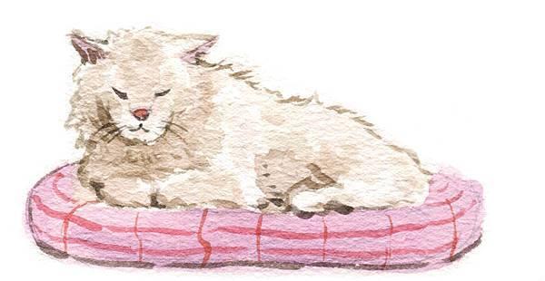 p40-1熟齡貓