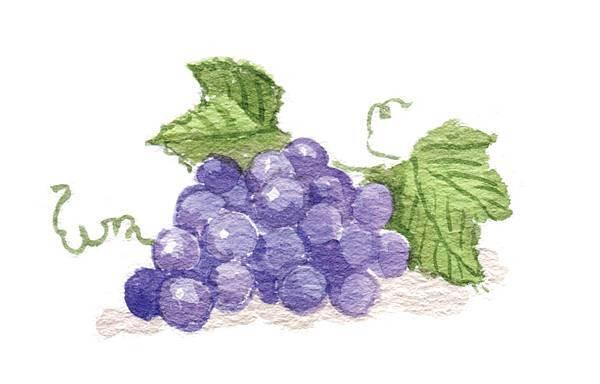 p67-2葡萄