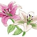 p68-2百合花