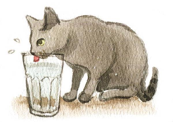 p18-正在喝水的貓咪