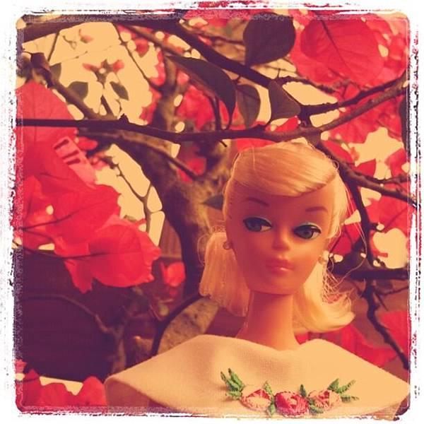 馬尾barbie