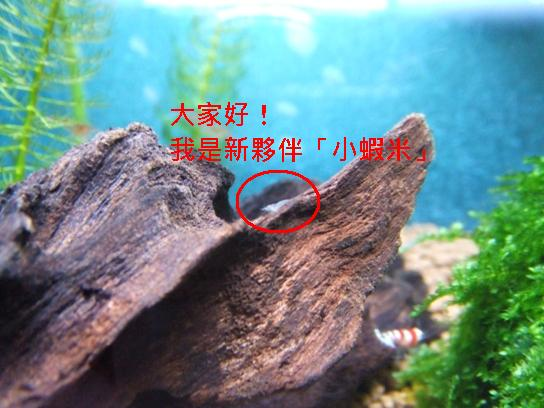 小蝦米.JPG