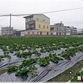 2012-02-25_13.56.48草莓園