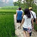 P1010177 廣西 碩龍 明仕田園