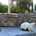 2013-10-13 16-04-08  艾菲索斯古城遺跡.JPG