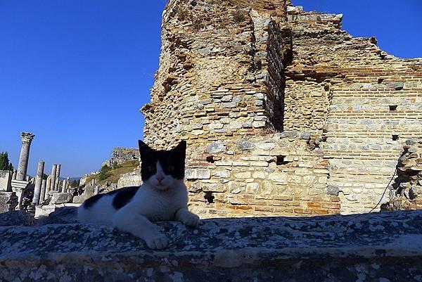 2013-10-13 16-21-21  艾菲索斯古城遺跡.JPG