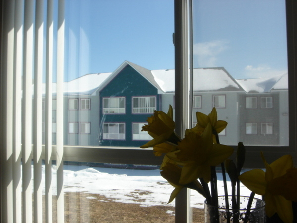 窗外好天氣
