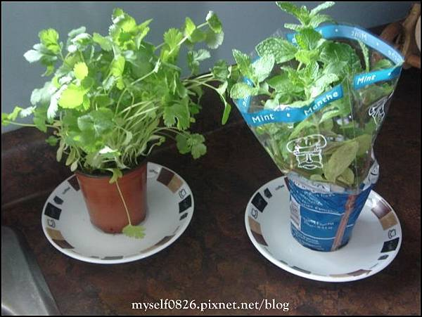 mini herb plants.JPG