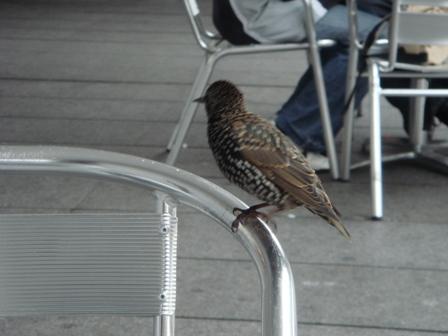 饑渴的小鳥